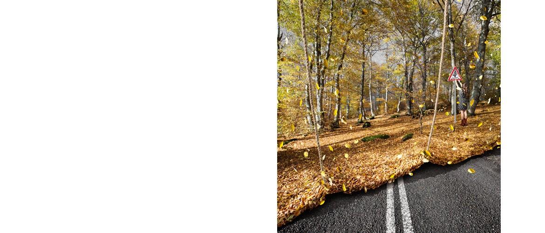 C216-rouleau d'automne